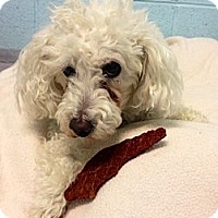Adopt A Pet :: Miko - Muskegon, MI