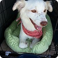 Adopt A Pet :: ELLE - Okatie, SC