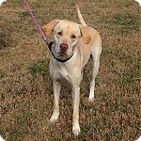 Adopt A Pet :: Delilah - Wilmington, MA
