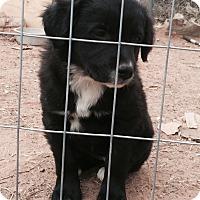Adopt A Pet :: Jody - McLoud, OK