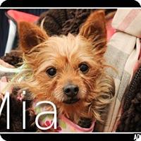 Adopt A Pet :: Mia - N. Babylon, NY