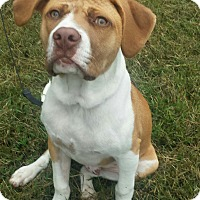 Adopt A Pet :: Sully - Normandy, TN