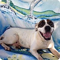 Adopt A Pet :: Betsy - Lebanon, CT