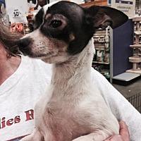 Adopt A Pet :: Bella - Fresno, CA