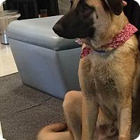 Adopt A Pet :: Oscar - Rexford, NY