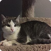 Adopt A Pet :: ZION - Rancho Cucamonga, CA