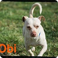 Adopt A Pet :: Obi - Old Saybrook, CT