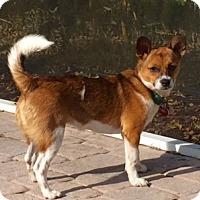 Adopt A Pet :: Bindi - Davie, FL
