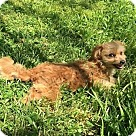 Adopt A Pet :: Poke Salad Annie (RBF)