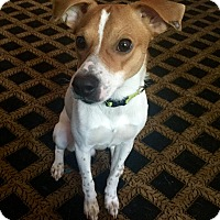 Adopt A Pet :: Eli - Nanuet, NY