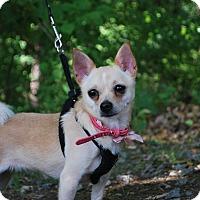Adopt A Pet :: Pippie - New Castle, PA