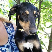 Adopt A Pet :: Kendra - Medora, IN