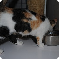 Adopt A Pet :: Autumn - Bay City, MI