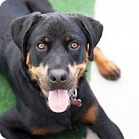 Adopt A Pet :: MacGyver - San Diego, CA