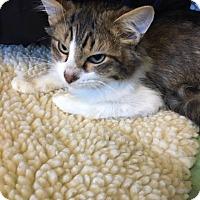 Adopt A Pet :: Ace - Adrian, MI