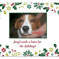 Adopt A Pet :: ANGEL - Ventnor City, NJ
