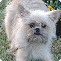 Adopt A Pet :: Dexter - Anderson, SC