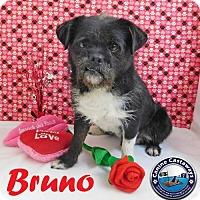 Adopt A Pet :: Bruno - Arcadia, FL