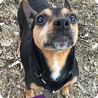 Adopt A Pet :: Morgan - Oak Park, IL