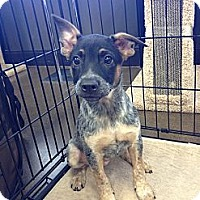 Adopt A Pet :: Mary Ann - Phoenix, AZ