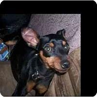 Adopt A Pet :: Cid - Phoenix, AZ