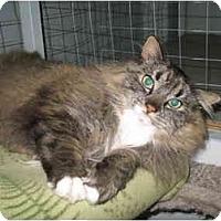 Adopt A Pet :: Hamlet - Mission, BC