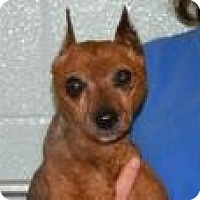 Adopt A Pet :: Mr Magoo - Topeka, KS