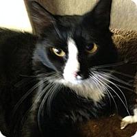 Adopt A Pet :: Skunk - Pace, FL