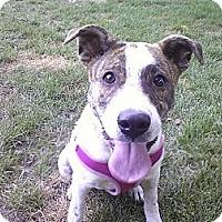 Adopt A Pet :: Allie - Grand Rapids, MI