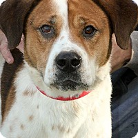 Adopt A Pet :: Krueger - Anderson, IN