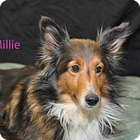 Adopt A Pet :: Millie - COLUMBUS, OH