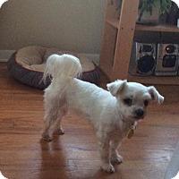 Adopt A Pet :: Sienna - Prole, IA