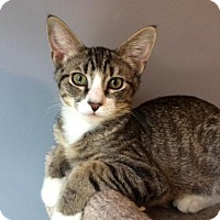 Adopt A Pet :: Connor - O'Fallon, MO