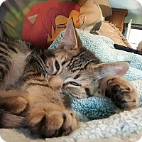 Adopt A Pet :: Casey - Berkeley Hts, NJ