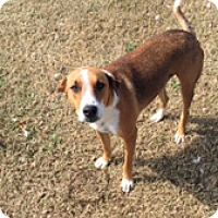Adopt A Pet :: Skipper In Blessing, Texas - Austin, TX