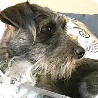 Adopt A Pet :: Sophia-ADOPTION PENDING - Boulder, CO