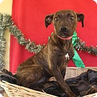 Adopt A Pet :: Sissy - Waldorf, MD