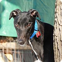 Adopt A Pet :: King - Ware, MA