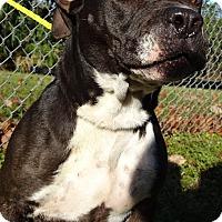 Adopt A Pet :: DOLLY - Brooksville, FL