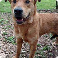 Adopt A Pet :: Woofie - Capon Bridge, WV
