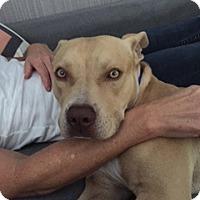 Adopt A Pet :: Peanut - Santa Monica, CA