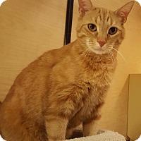Adopt A Pet :: Ben - Jackson, NJ
