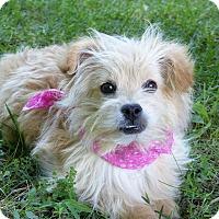 Adopt A Pet :: Lulu - Mocksville, NC