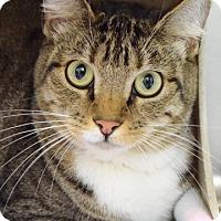 Adopt A Pet :: Aria - Dublin, CA
