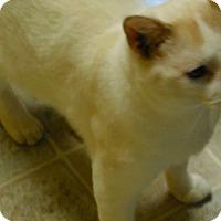 Adopt A Pet :: Simba - Salem, WV