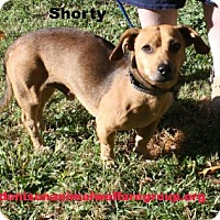 Adopt A Pet :: Shorty - Denison, TX