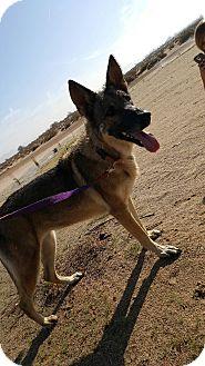 German Shepherd Dog Dog for adoption in Victorville, California - Scarlett