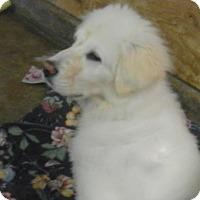 Adopt A Pet :: SAGE - Granite Bay, CA