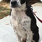Adopt A Pet :: Sadie