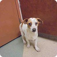 Adopt A Pet :: ROTOR - Upland, CA